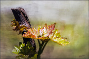 Grape Leaf Prints - New Life... Print by Gary Rose