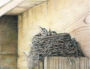 Baby Bird Drawings Framed Prints - New Life Under My Deck Framed Print by Charlotte Yealey