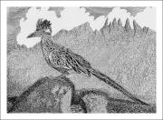 Scenic Drawings Framed Prints - New Mexico Roadrunner Framed Print by Jack Pumphrey