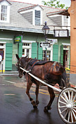 Drawn Prints - New Orleans - Bourbon Street Horse Print by Frank Romeo