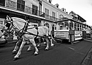 Quarter Horses Posters - New Orleans Cortege  Poster by Steve Harrington