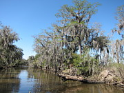 Swamps Prints - New Orleans - Swamp Boat Ride - 1212125 Print by DC Photographer