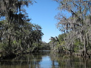 Swamp Prints - New Orleans - Swamp Boat Ride - 1212126 Print by DC Photographer