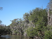 New Prints - New Orleans - Swamp Boat Ride - 1212130 Print by DC Photographer