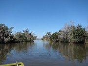 Louisiana Prints - New Orleans - Swamp Boat Ride - 121243 Print by DC Photographer