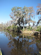 Swamp Prints - New Orleans - Swamp Boat Ride - 121294 Print by DC Photographer