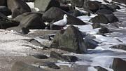 John Williams - New Quay Gull 3