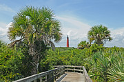 Saw Palmetto Prints - New Smyrna Nature Walk Print by Harry Lamb