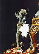 Boxer Puppy Digital Art Metal Prints - New to the World Metal Print by Judy Wood