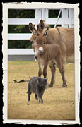 Donkey Foal Prints - New Wonders Print by Tiana McVay