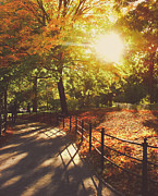 New York City Prints - New York Autumn - Sunset - Central Park Print by Vivienne Gucwa