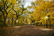 Central Park Photo Posters - New York City - Autumn - Central Park - Literary Walk Poster by Vivienne Gucwa