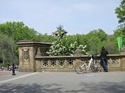 Carriage Framed Prints - New York City - Central Park - 121210 Framed Print by DC Photographer