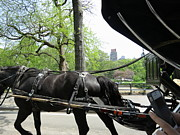 Carriage Photo Prints - New York City - Central Park - 12122 Print by DC Photographer
