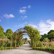 New Zealand Prints - New Zealand Christchurch Hagley Park Rose Garden Summer Print by Colin and Linda McKie