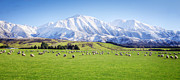 Featured Art - New Zealand Farmland Panorama by Colin and Linda McKie