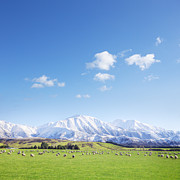 Beautiful Framed Prints - New Zealand Farmland Square Framed Print by Colin and Linda McKie