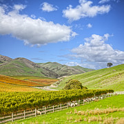 Vineyard Posters - New Zealand Marlborough Vineyard in Autumn Poster by Colin and Linda McKie