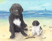 Paw Prints Posters - Newfoundland Dog Landseer Puppy Beach Cathy Peek Animal Art Poster by Cathy Peek