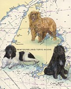 Newfoundland Art Paintings - Newfoundland Dog Trio Chart Map Art Cathy peek by Cathy Peek