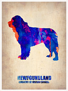 Cute Dog Digital Art Prints - Newfoundland Poster Print by Irina  March