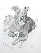 Pet Drawings Prints - Newman Print by Joette Snyder