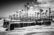 Businesses Prints - Newport Beach Dory Fishing Fleet Black and White Picture Print by Paul Velgos