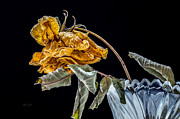 Macro Prints - News From Up The Street Print by Bob Orsillo