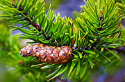 Pine Cones Framed Prints - Next Generation Framed Print by ABeautifulSky  Photography