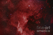 Light Emission Framed Prints - Ngc 7000, The North America Nebula Framed Print by Reinhold Wittich