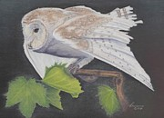 Grape Leaves Pastels - Nght Owl by Laurianna Taylor