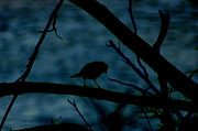 Night Bird Print by Kim Pate