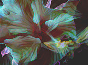 Blooming Digital Art - Night Bloom by Ursula Freer