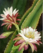 Summer Celeste Painting Posters - Night Cereus Poster by Summer Celeste