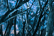 Anthony Vlach - Night Forest