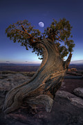 Moonlit Night Photo Prints - Night Guardian of the Valley Print by Marco Crupi