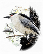 Photoshop Digital Art - Night Heron by Helen Roach