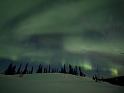 Northern Lights Posters - Night Lights Poster by Priska Wettstein