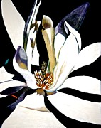 Unique Art Pastels Posters - Night Lily Poster by Susan Robinson