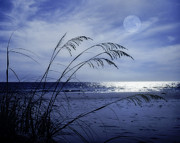 Blue Moon Photos - Night on the Beach by David and Carol Kelly