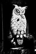 Strange Owl Posters - Night Owl Poster by Newel Hunter