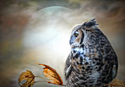 Susan Schwarting - Night Owl