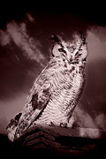 Perched Mixed Media Posters - Night Owl Poster by Tawnya Apuan