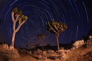 Tree Lines Pyrography Framed Prints - Night Shot of Star Trails in Joshua Tree National Park in Califo Framed Print by Katrina Brown