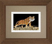 The Tiger Paintings - NIGHT STALKER Custom Framed ARTIST PROOF Print For Sale - Offered Direct By The Artist by Andrew Wells
