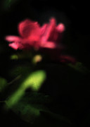 Rose Of Sharon Metal Prints - Night Vision Metal Print by Rebecca Sherman