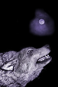 Wolf Moon Posters - Night wolf Poster by Angel Jesus De la Fuente