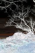 Carolyn Stagger Cokley - nightfall negative