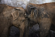 Elephant Metal Prints - Nighty Night Darling Metal Print by Joachim G Pinkawa