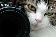 Andee Photography Fine Art And Digital Design Photo Posters - Nikon Kitty Poster by Andee Photography